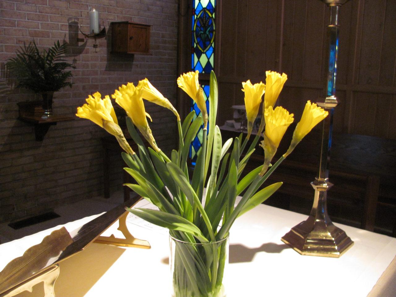 St. David's Day celebrated